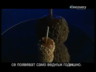 Discovery Channel Bulgaria